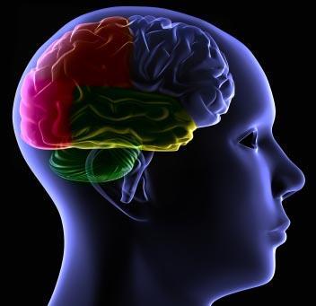 Brain plasticity Autism